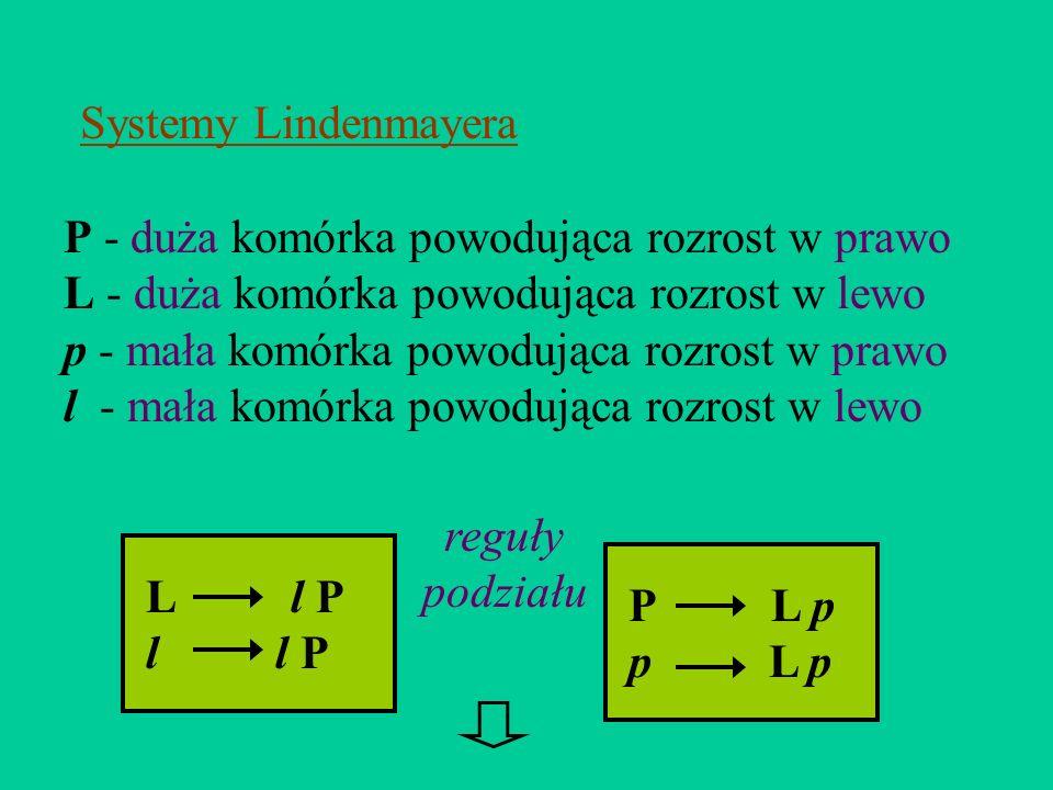 Systemy Lindenmayera P - duża komórka powodująca rozrost w prawo. L - duża komórka powodująca rozrost w lewo.