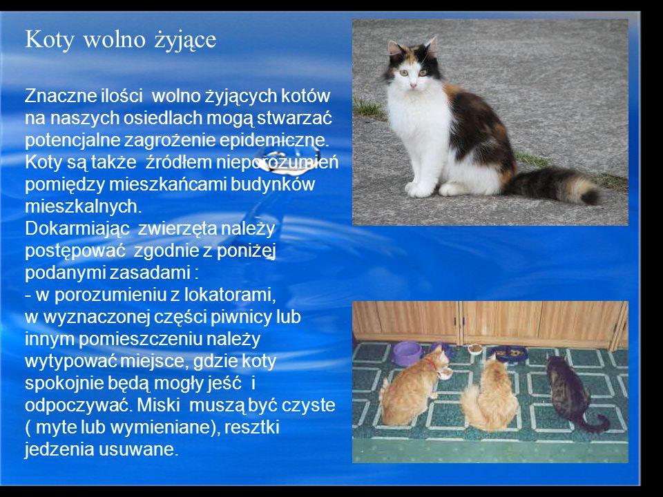 Koty wolno żyjąceZnaczne ilości wolno żyjących kotów na naszych osiedlach mogą stwarzać potencjalne zagrożenie epidemiczne.