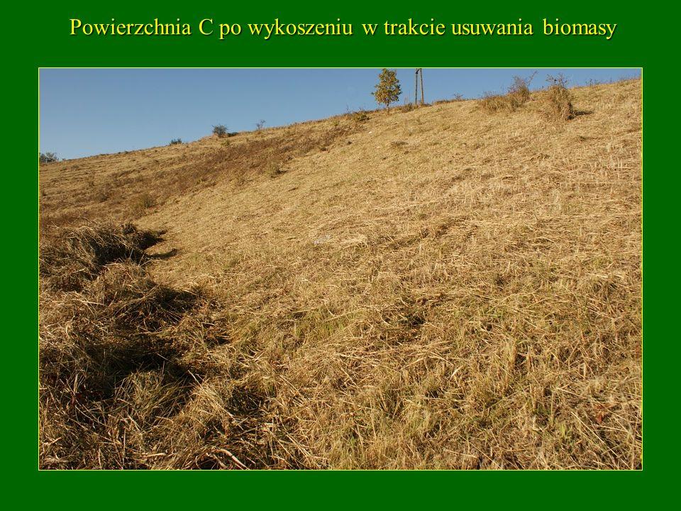 Powierzchnia C po wykoszeniu w trakcie usuwania biomasy