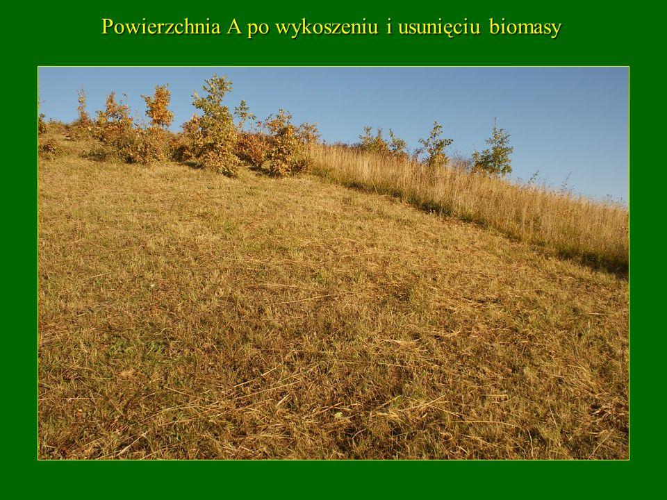 Powierzchnia A po wykoszeniu i usunięciu biomasy