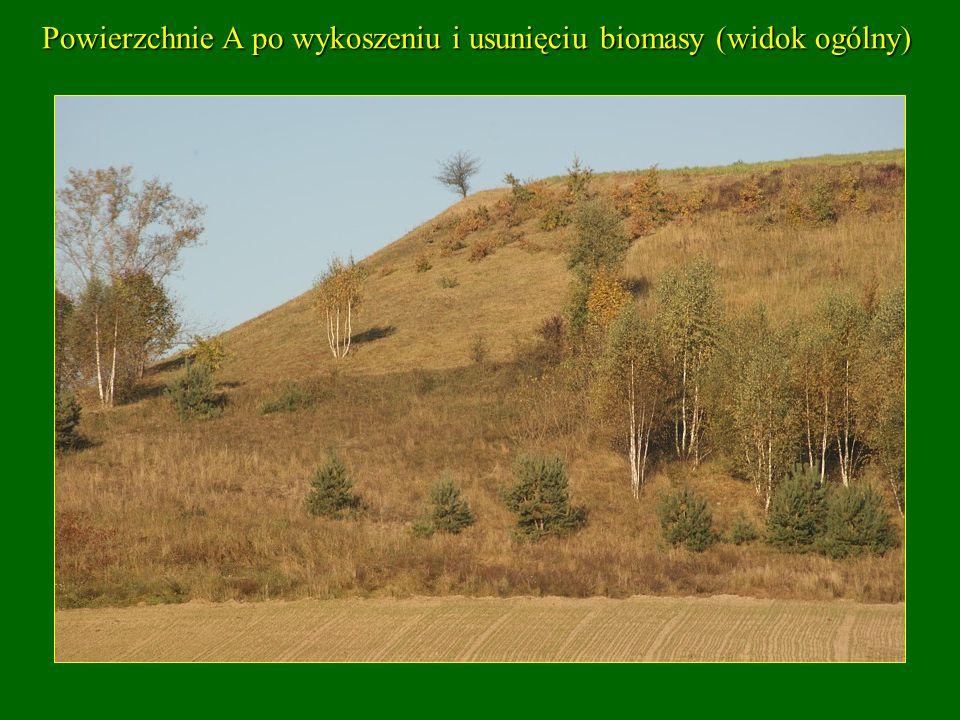 Powierzchnie A po wykoszeniu i usunięciu biomasy (widok ogólny)