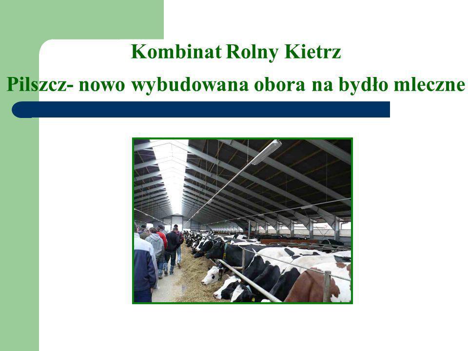 Kombinat Rolny Kietrz Pilszcz- nowo wybudowana obora na bydło mleczne