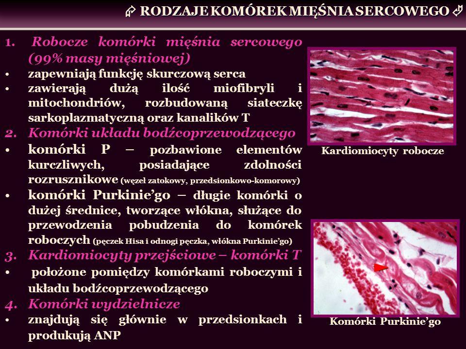 Kardiomiocyty robocze