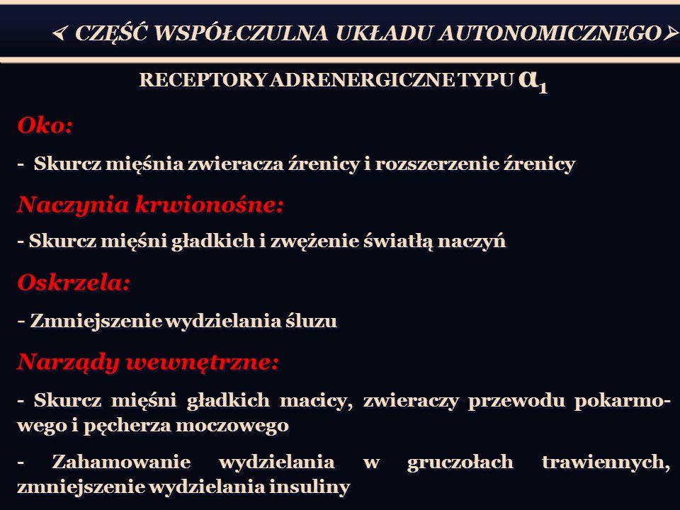 RECEPTORY ADRENERGICZNE TYPU α1
