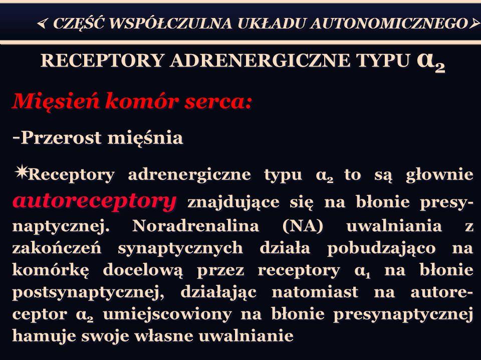 RECEPTORY ADRENERGICZNE TYPU α2