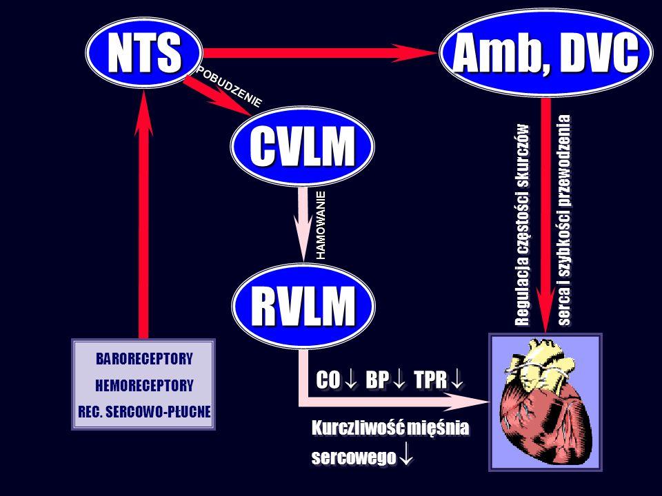 Amb, DVC NTS CVLM RVLM CO  BP  TPR  Kurczliwość mięśnia sercowego 
