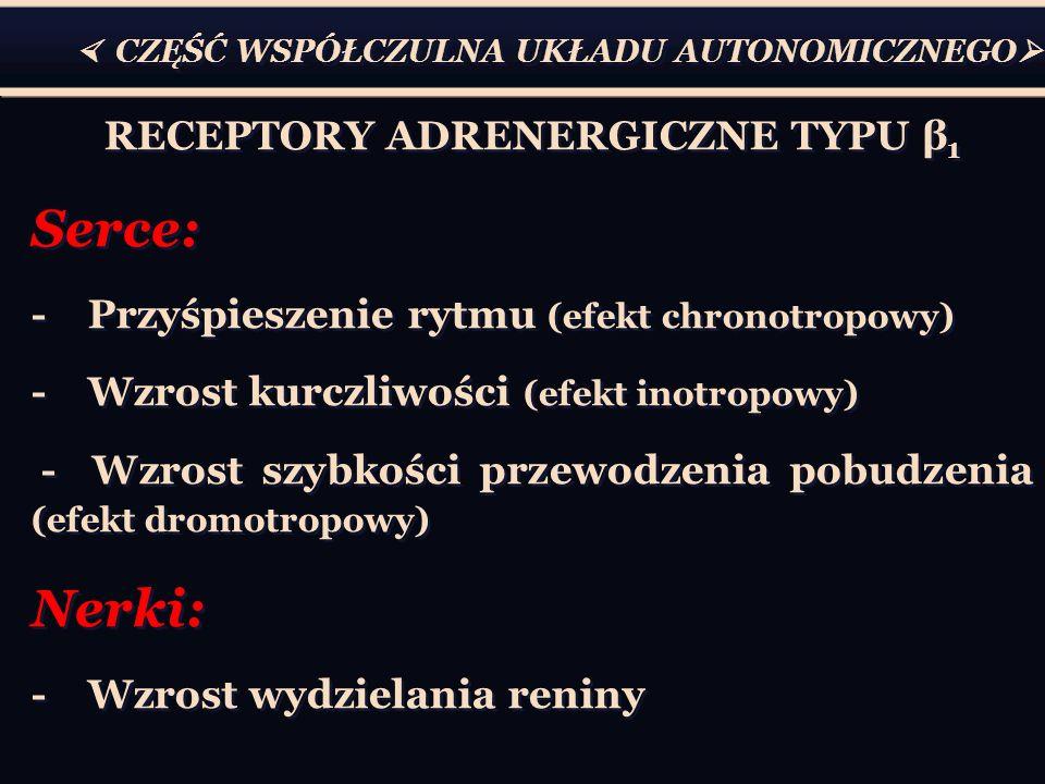 RECEPTORY ADRENERGICZNE TYPU β1