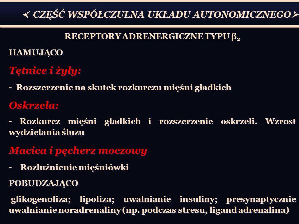 RECEPTORY ADRENERGICZNE TYPU β2
