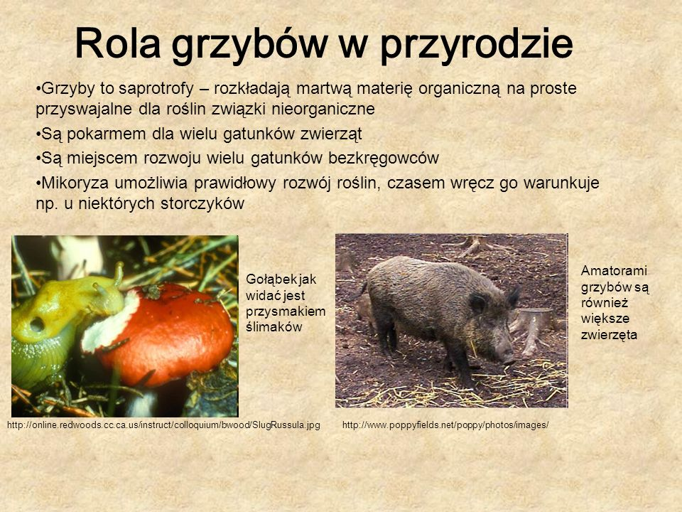 Rola grzybów w przyrodzie