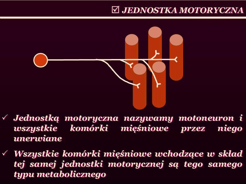  JEDNOSTKA MOTORYCZNA