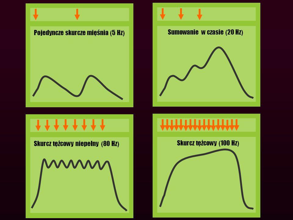 Pojedyncze skurcze mięśnia (5 Hz)