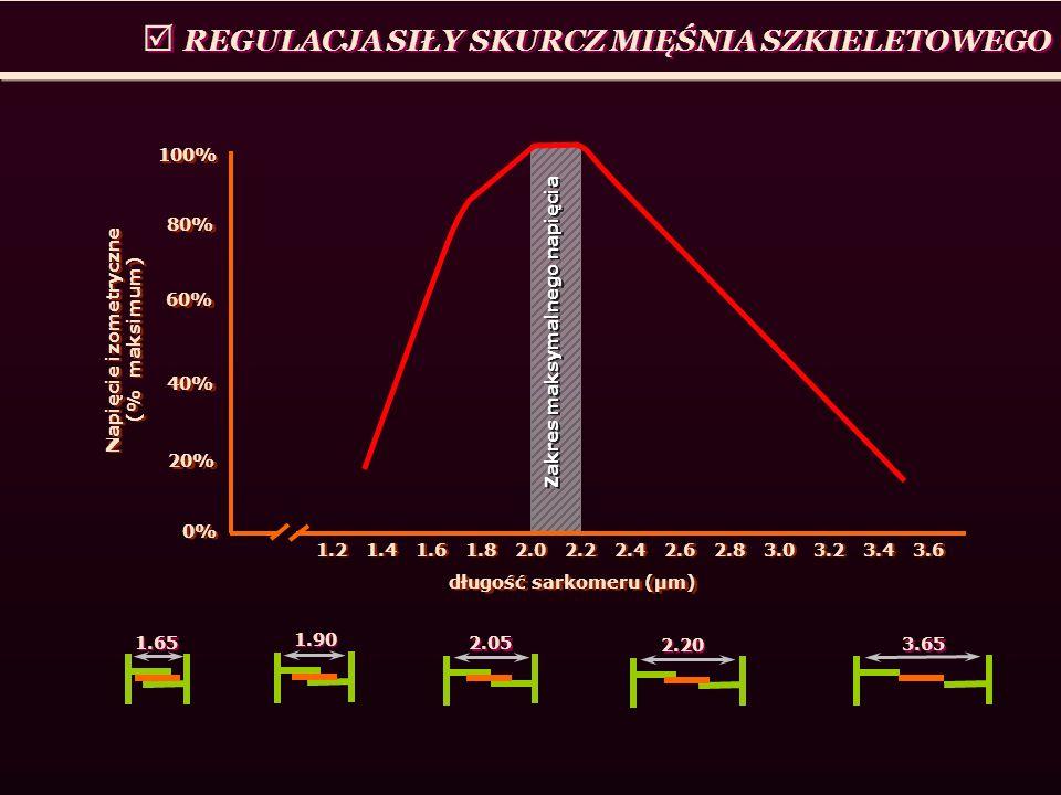 Napięcie izometryczne (% maksimum)