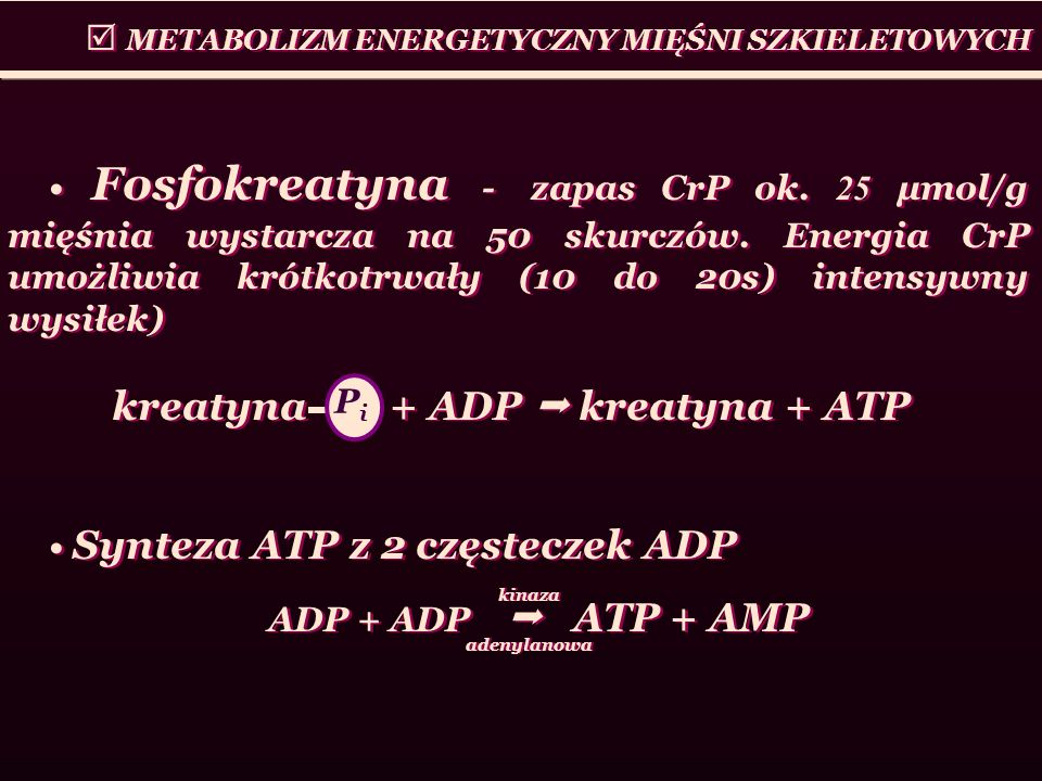 kreatyna + ADP  kreatyna + ATP