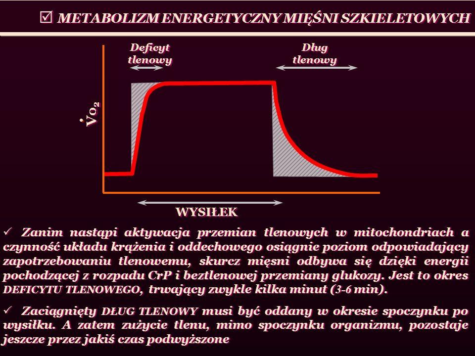  METABOLIZM ENERGETYCZNY MIĘŚNI SZKIELETOWYCH