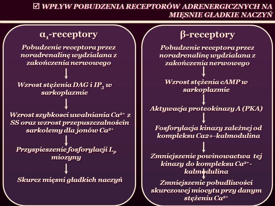 α1-receptory β-receptory