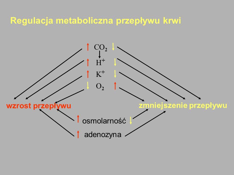 Regulacja metaboliczna przepływu krwi