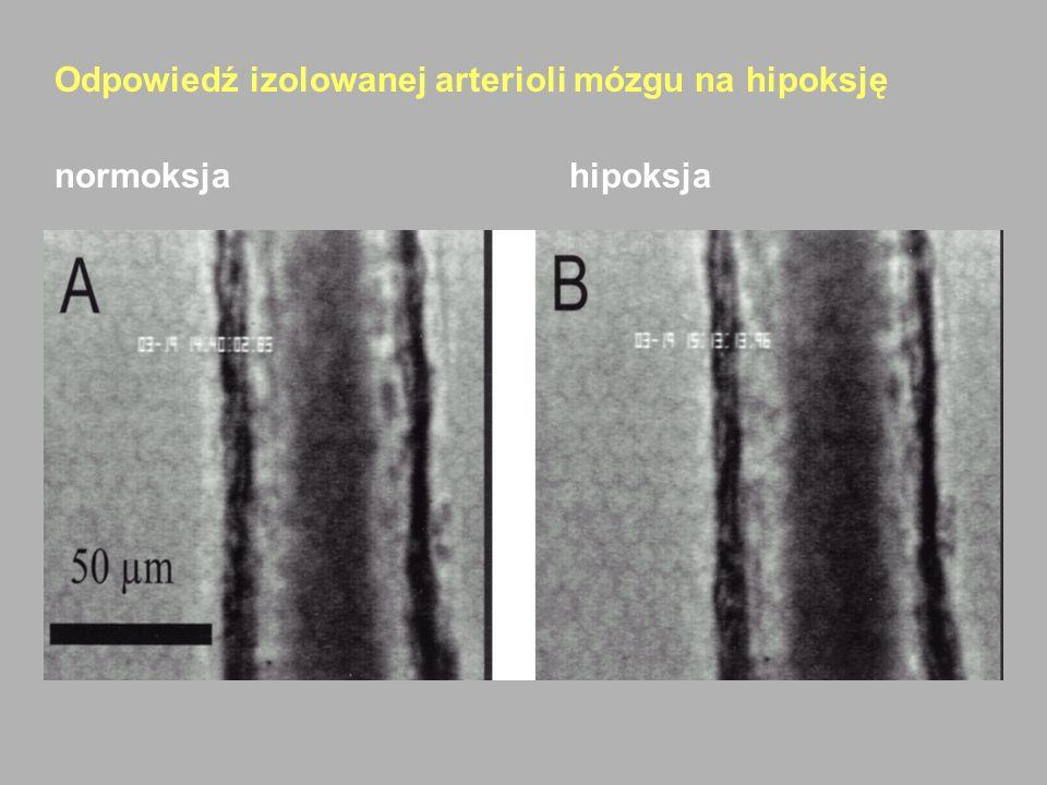 Odpowiedź izolowanej arterioli mózgu na hipoksję