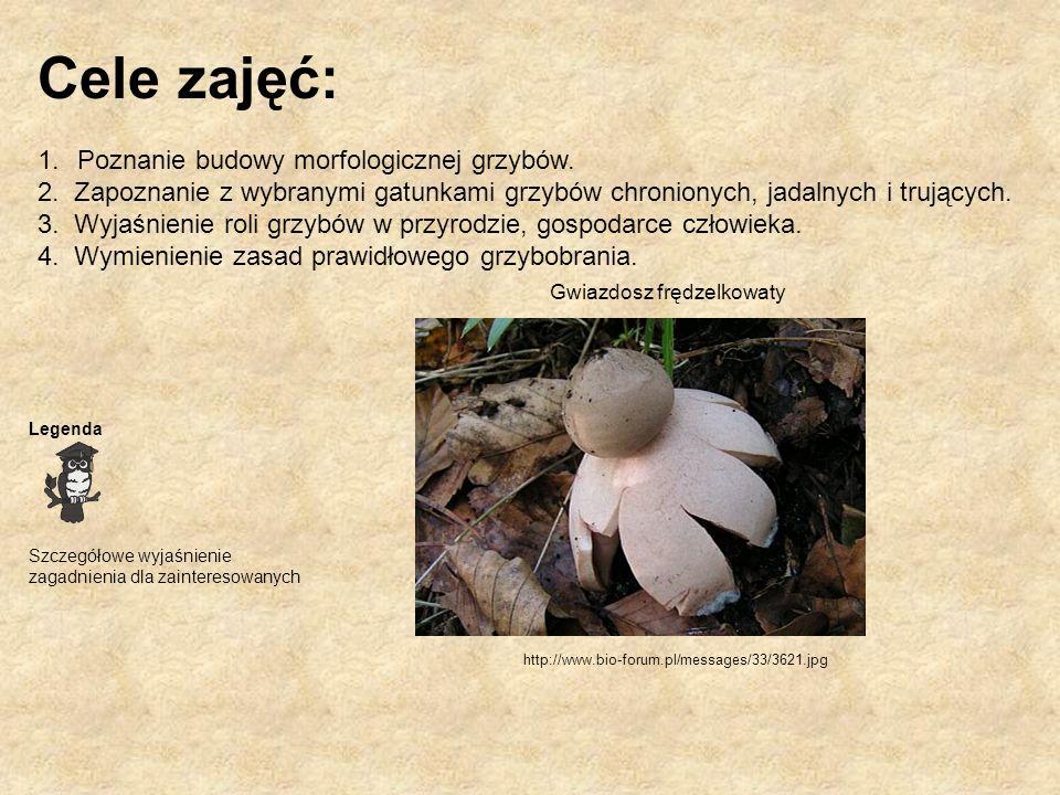 Cele zajęć: Poznanie budowy morfologicznej grzybów.