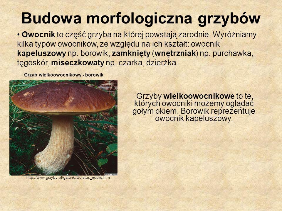 Budowa morfologiczna grzybów