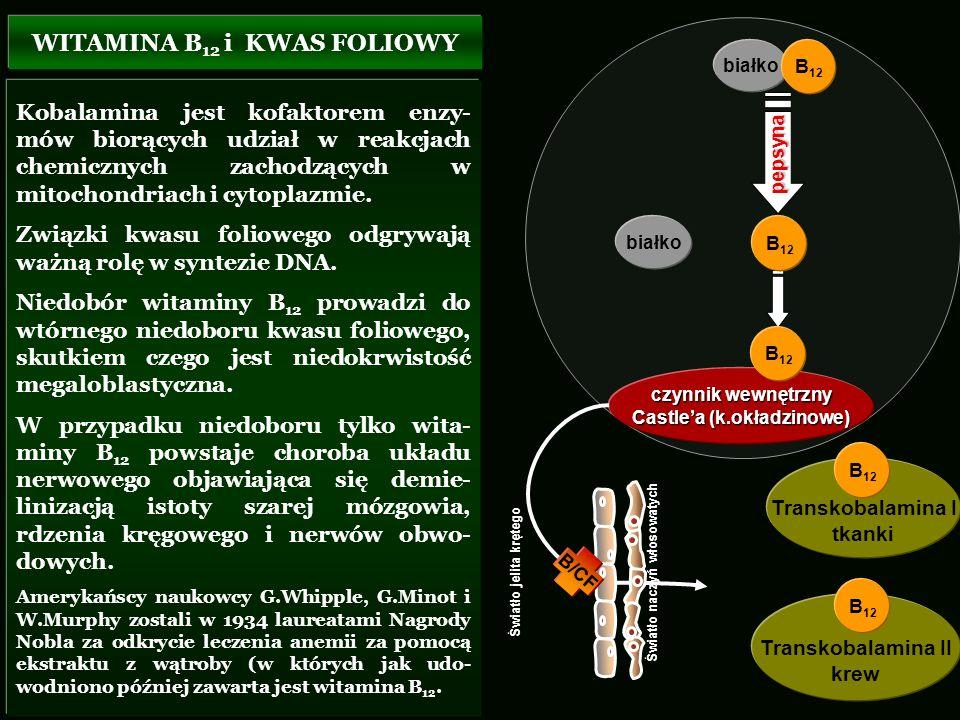 WITAMINA B12 i KWAS FOLIOWY