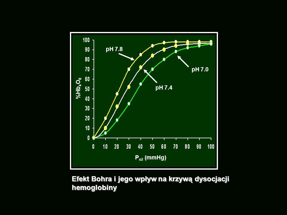 Efekt Bohra i jego wpływ na krzywą dysocjacji hemoglobiny