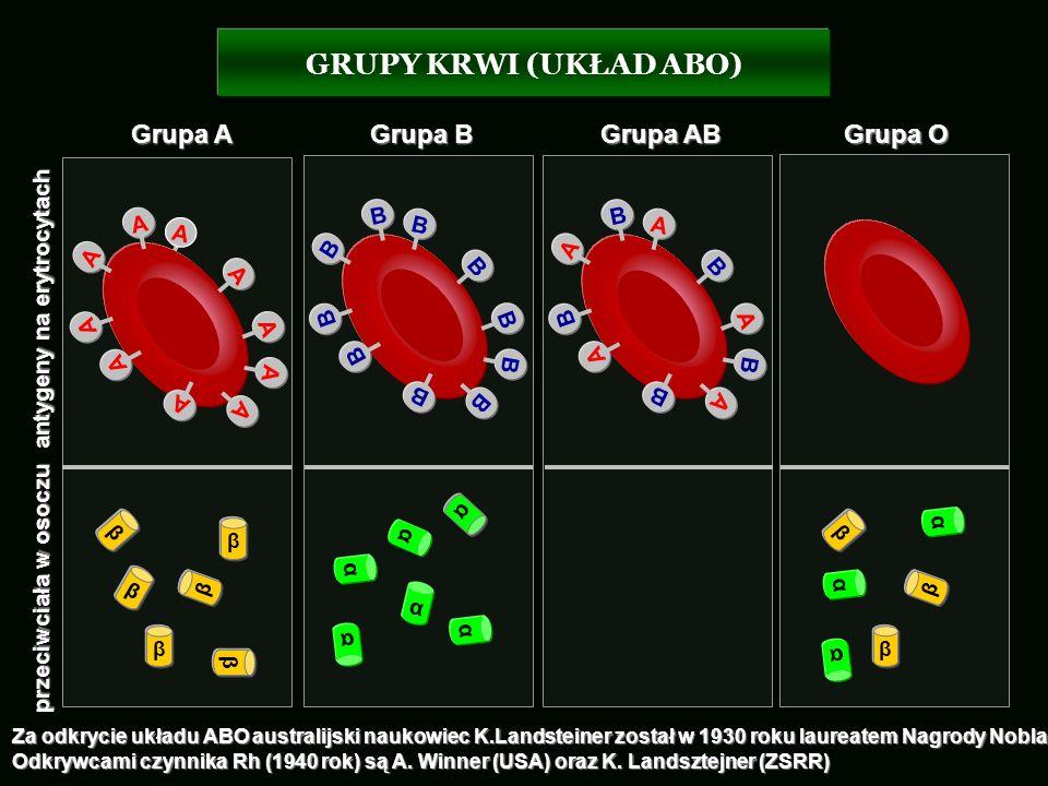 GRUPY KRWI (UKŁAD ABO) Grupa A Grupa B Grupa AB Grupa O B B A B A B