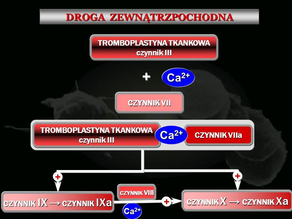 + Ca2+ DROGA ZEWNĄTRZPOCHODNA TROMBOPLASTYNA TKANKOWA czynnik III
