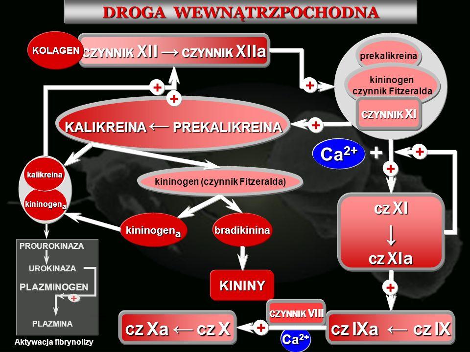 ↓ Ca2+ DROGA WEWNĄTRZPOCHODNA + CZYNNIK XII → CZYNNIK XIIa CZ XI