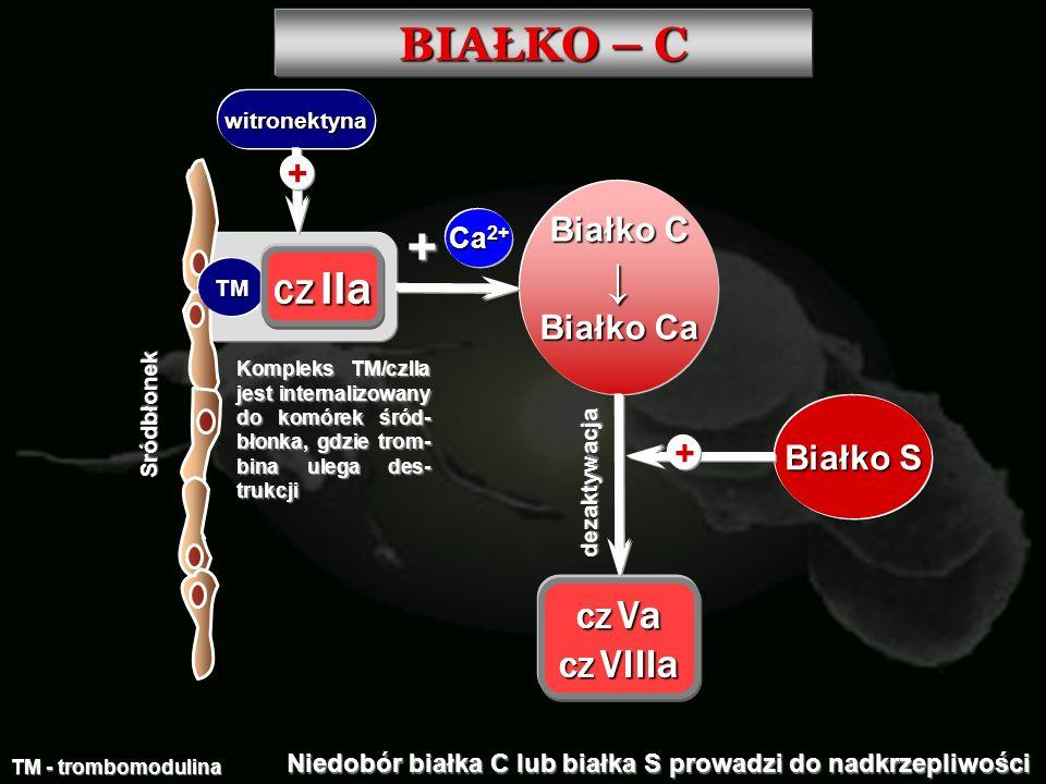 BIAŁKO – C ↓ + Białko C Białko Ca CZ IIa Białko S Ca2+ CZ Va CZ VIIIa