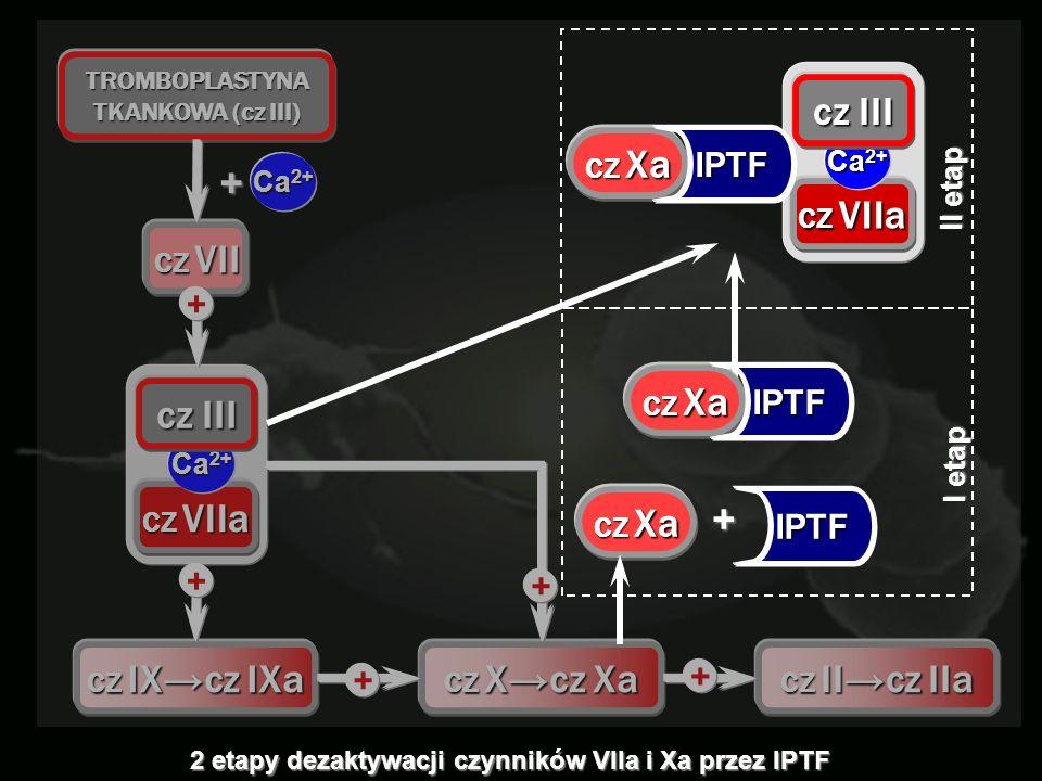 + cz III IPTF Ca2+ CZ VII CZ VIIa CZ IX→cz IXa CZ X→cz Xa CZ II→cz IIa
