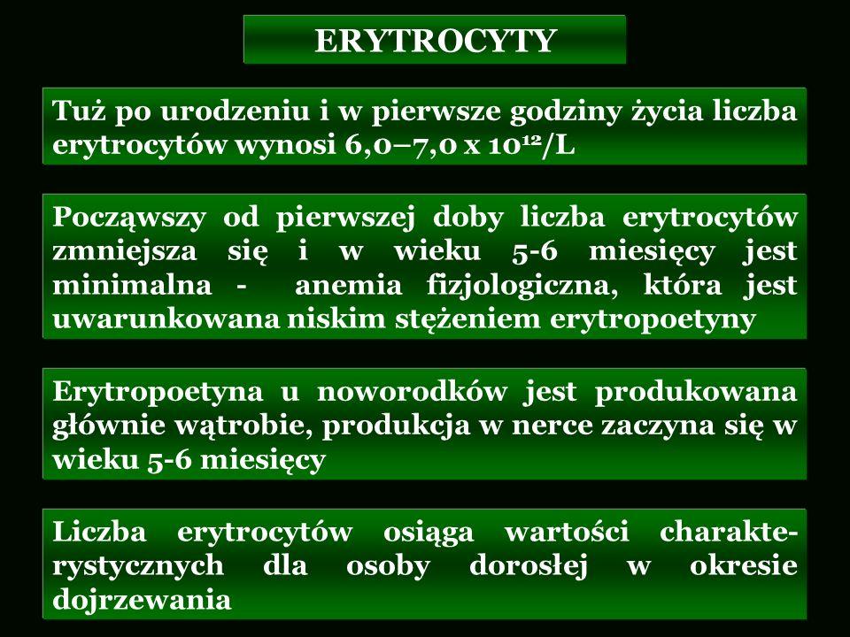 ERYTROCYTY Tuż po urodzeniu i w pierwsze godziny życia liczba erytrocytów wynosi 6,0–7,0 x 1012/L.