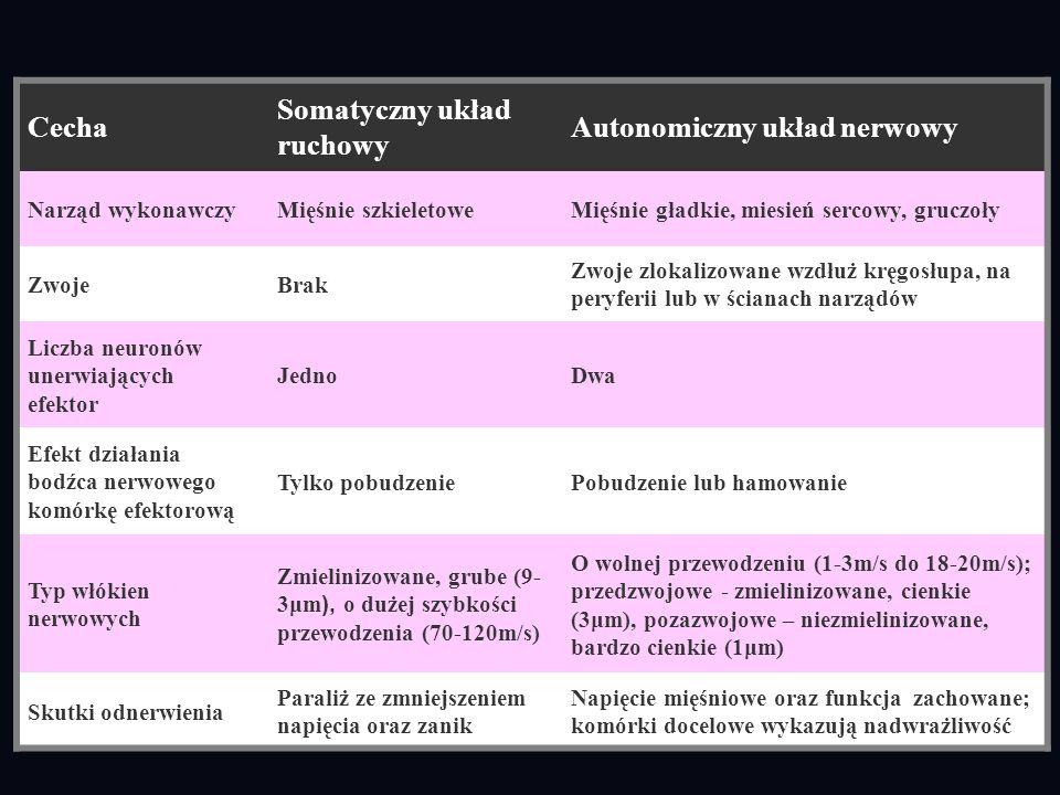 Somatyczny układ ruchowy Autonomiczny układ nerwowy