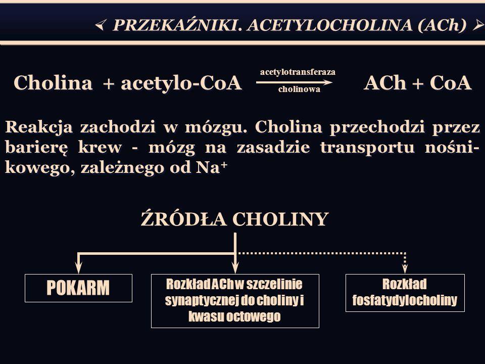 Cholina + acetylo-CoA ACh + CoA