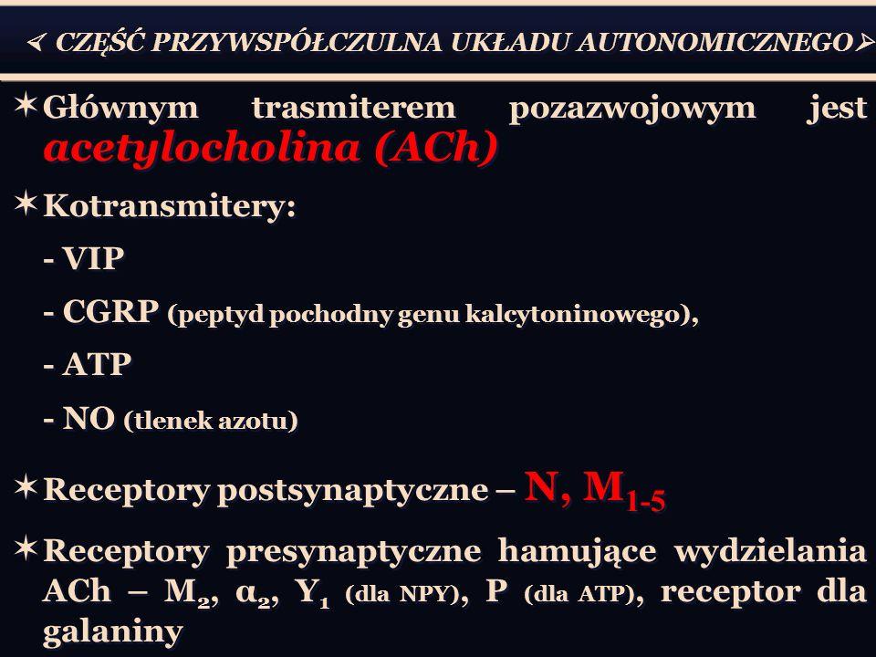 Głównym trasmiterem pozazwojowym jest acetylocholina (ACh)