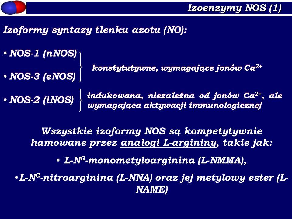 Izoformy syntazy tlenku azotu (NO): NOS-1 (nNOS) NOS-3 (eNOS)