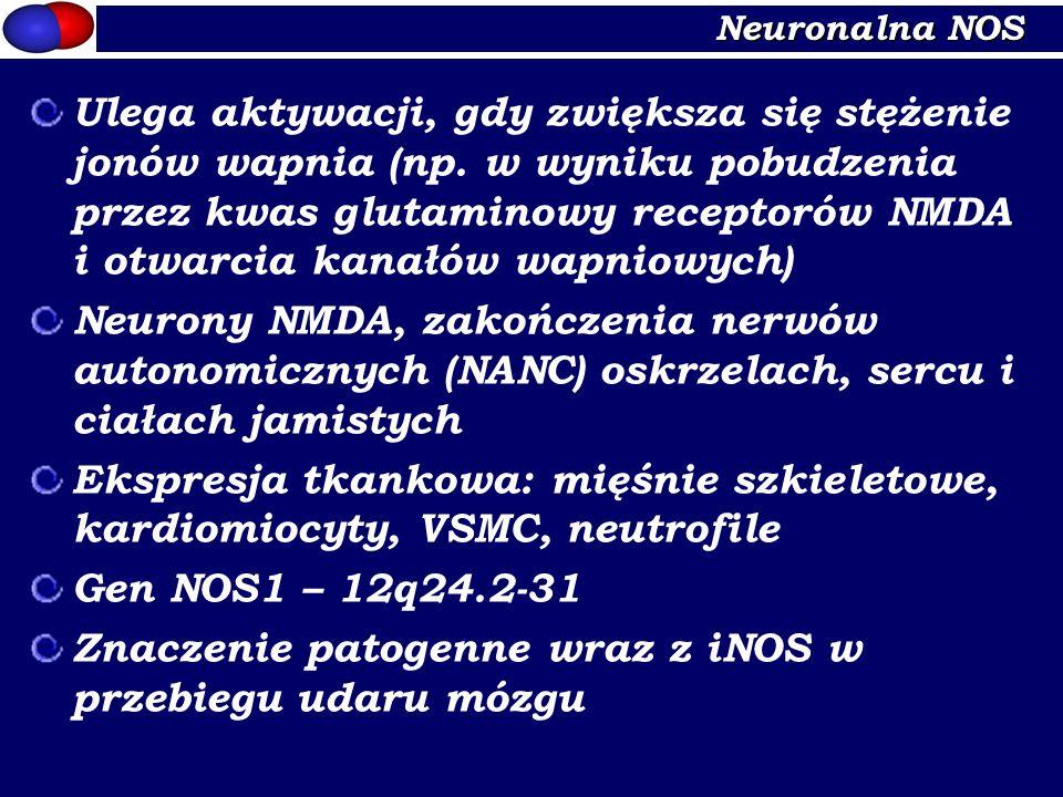 Znaczenie patogenne wraz z iNOS w przebiegu udaru mózgu