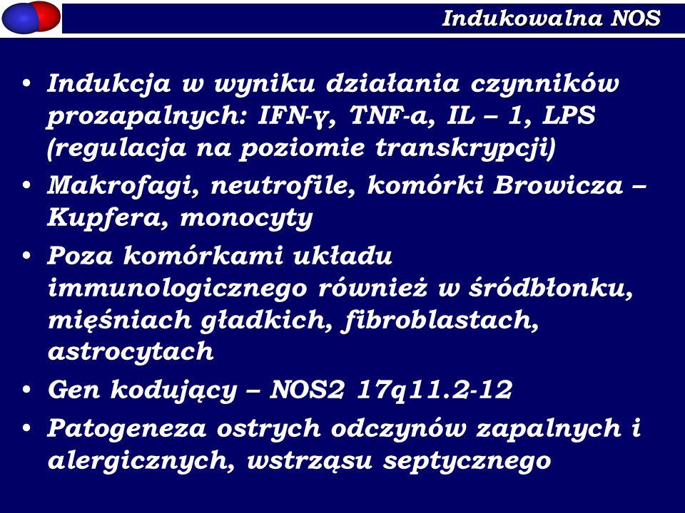 Makrofagi, neutrofile, komórki Browicza – Kupfera, monocyty