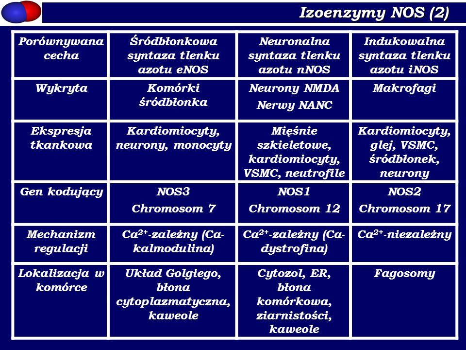 Izoenzymy NOS (2) Porównywana cecha
