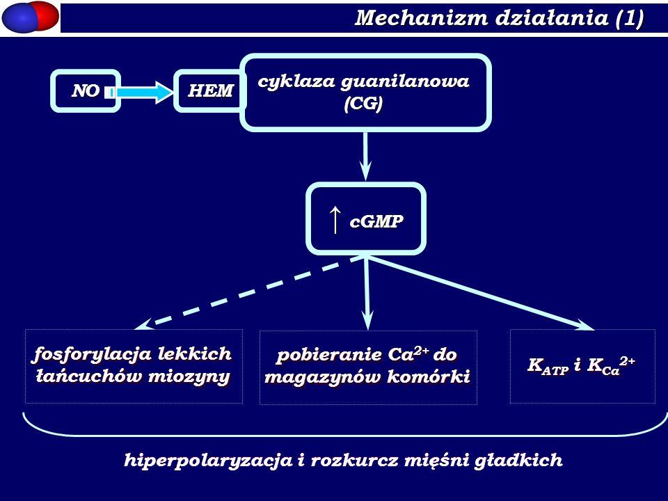 ↑ cGMP Mechanizm działania (1) cyklaza guanilanowa (CG) NO HEM