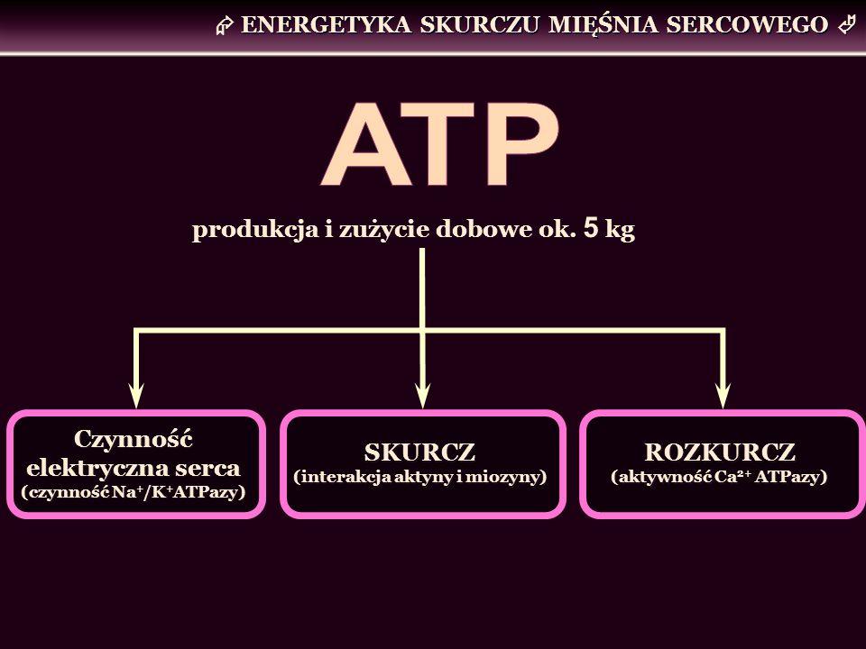 ATP  ENERGETYKA SKURCZU MIĘŚNIA SERCOWEGO 