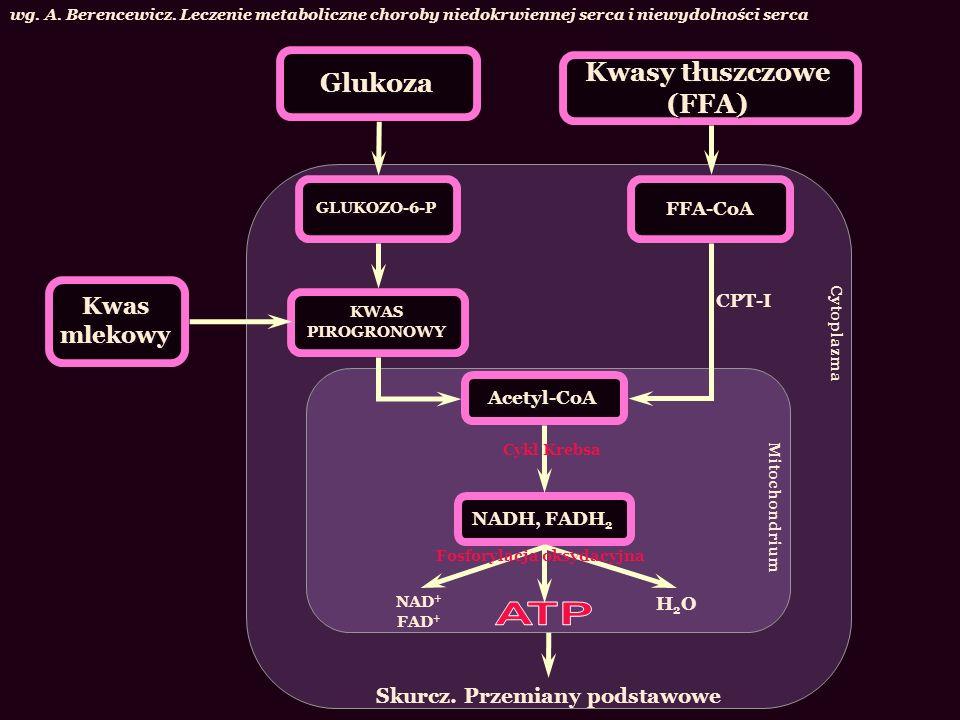 ATP Kwasy tłuszczowe (FFA) Glukoza Kwas mlekowy