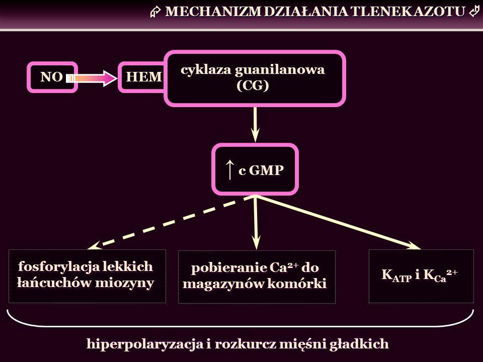 ↑ c GMP  MECHANIZM DZIAŁANIA TLENEK AZOTU  cyklaza guanilanowa (CG)