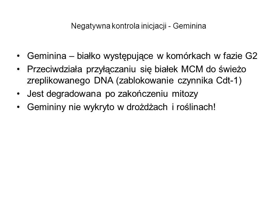 Negatywna kontrola inicjacji - Geminina