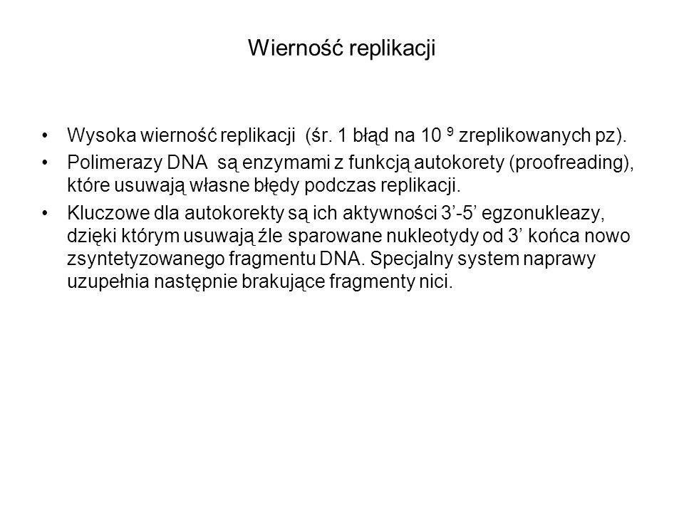 Wierność replikacji Wysoka wierność replikacji (śr. 1 błąd na 10 9 zreplikowanych pz).