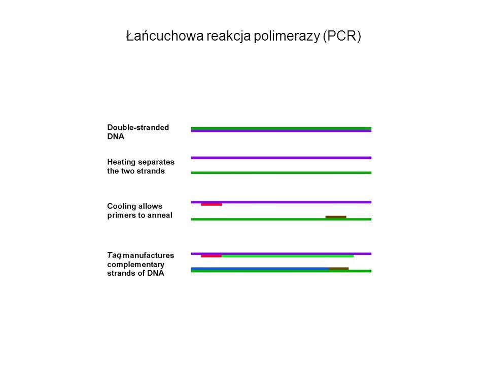 Łańcuchowa reakcja polimerazy (PCR)