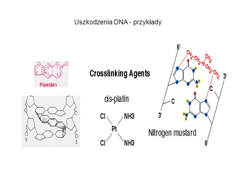 Uszkodzenia DNA - przykłady
