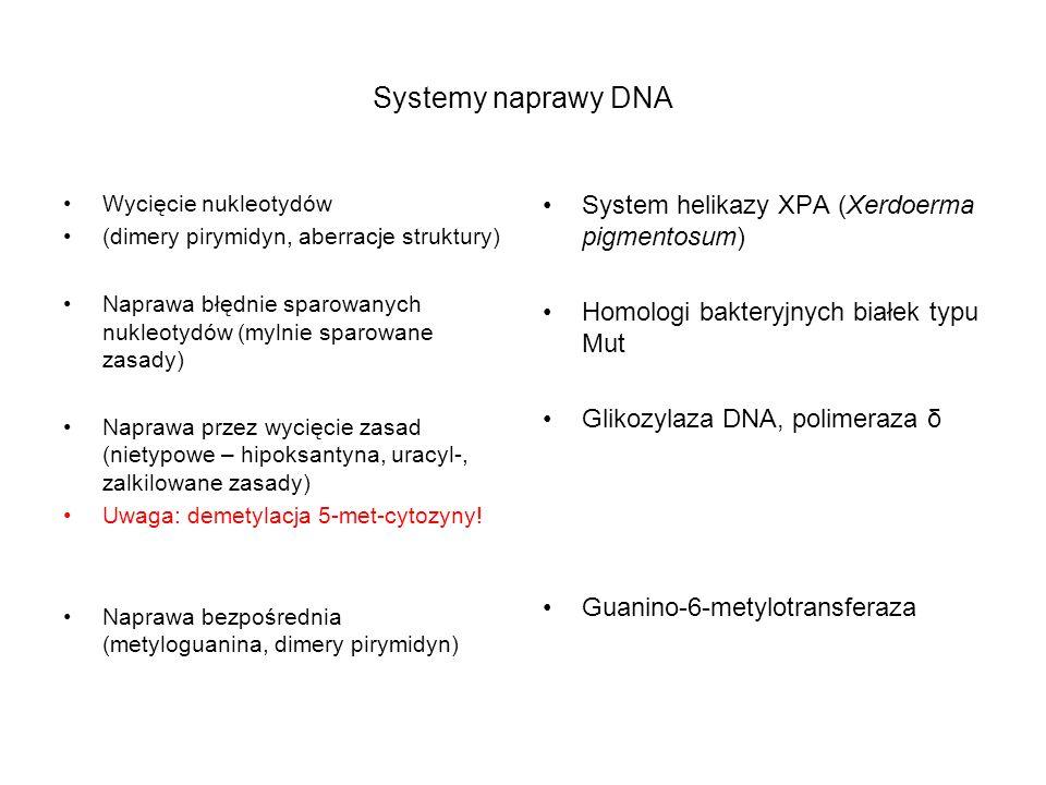 Systemy naprawy DNA System helikazy XPA (Xerdoerma pigmentosum)