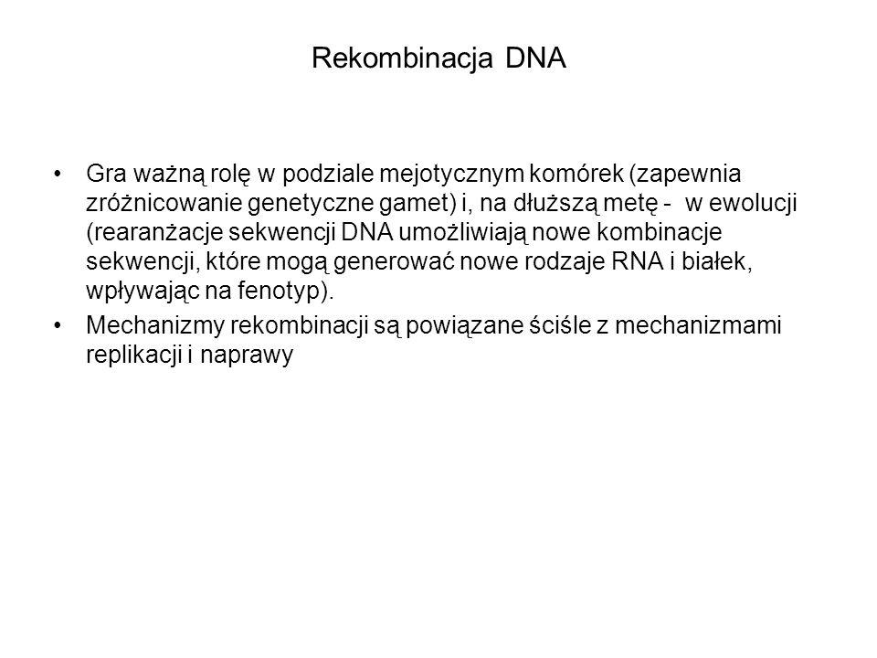 Rekombinacja DNA