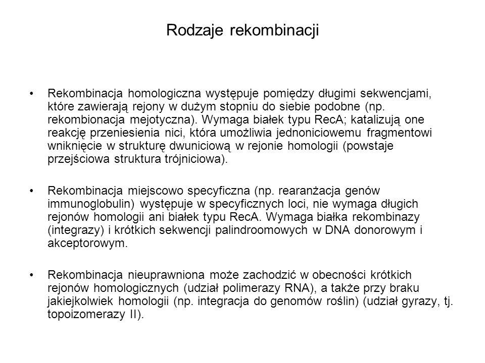 Rodzaje rekombinacji