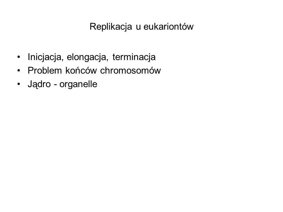 Replikacja u eukariontów